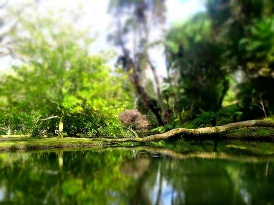 Terra Nostra Gardens: parque terra nostra