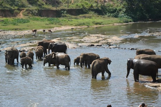 Cinnamon Lodge Habarana: Elephant in the wild, this view was from lunch.