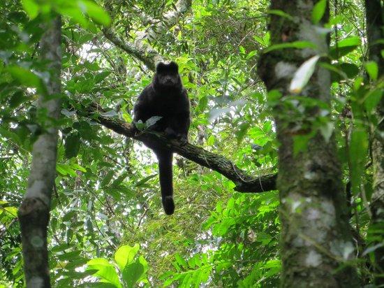 Parque Estadual da Cantareira - Nucleo Pedra Grande: Monkey
