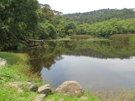 Parque Estadual da Cantareira - Nucleo Pedra Grande: Small lake