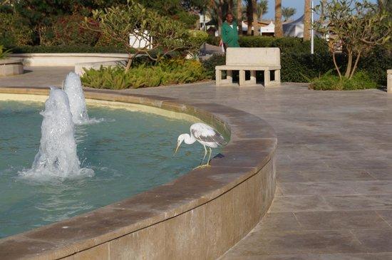 Baron Resort Sharm El Sheikh: фонтан и птичка