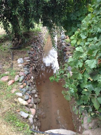 B&B Plaza Italia: Irrigation canals at Bodega San Diego