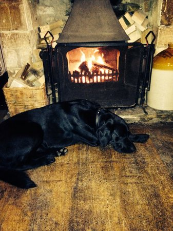 The Cotswold Arms: Arthur cosy by the fire!!! ❤️