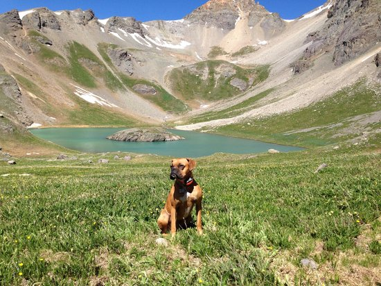 Island Lake: Charlie loved the hike, especially the chipmunks