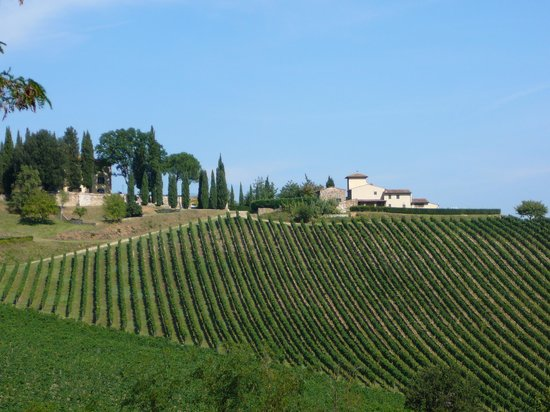 Tenuta Branca : The vineyards of Villa Branca