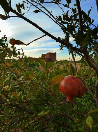 Dar Tasmayoun: Jardin