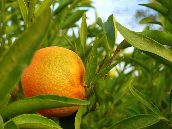 Dar Tasmayoun: Fruits du jardin