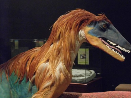 Museum of the Rockies : Possible skin and feather coloration of dinosaurs