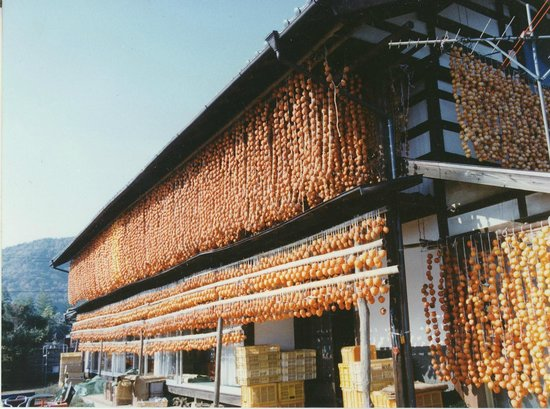 Traditional dried persimmon: Persimmon hung with old houses 古民家とつるし柿