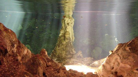 Cenotes Dos Ojos: Cenário perfeito!