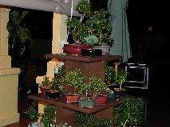 EPCOT : Outdoor bonsai