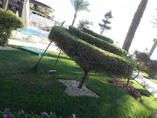 Savoy Sharm El Sheikh: garden