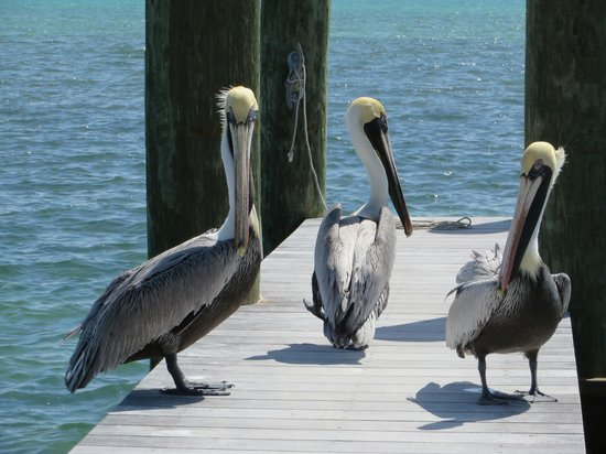 La Siesta Resort & Marina: These guys were so not afraid of us!
