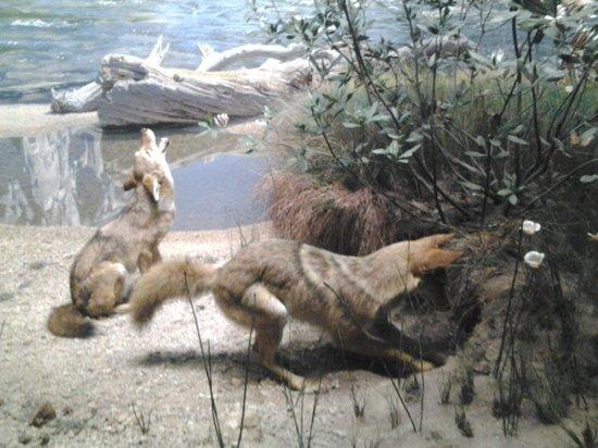 American Museum of Natural History : una scena di animali