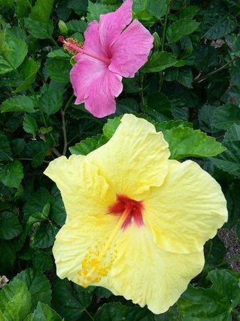 Kings' Land by Hilton Grand Vacations: Amazing lemony Yellows and vivid pinks