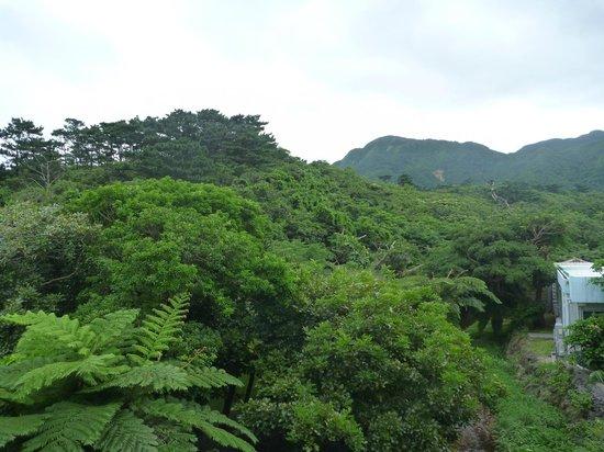 Jungle Hotel Painu Maya: 部屋からの眺め2