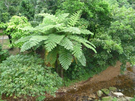 Jungle Hotel Painu Maya: 部屋からの眺め1