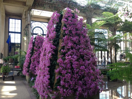 Longwood Gardens: Glorious Orchids on a tree form