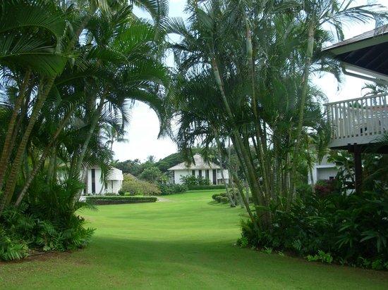 Kiahuna Plantation Resort : Every condo had a great view