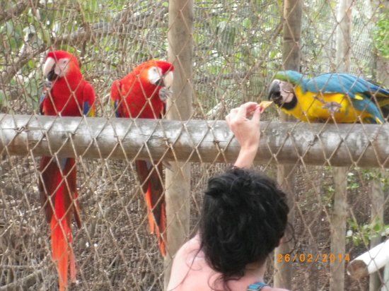 Decameron Isla Palma: captivity birds