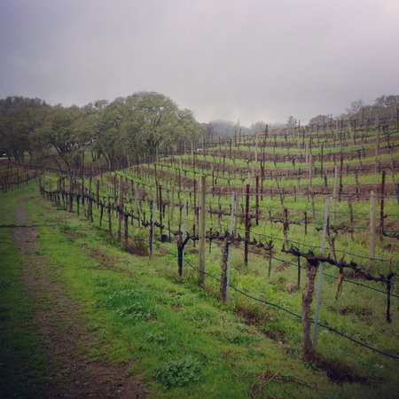 Healdsburg Wine Tours : amazing vineyard that we'd never have gone to without sid