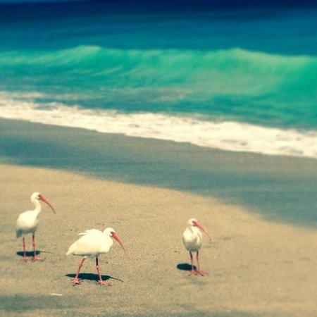 Beach friends at Vistana's Beach Club