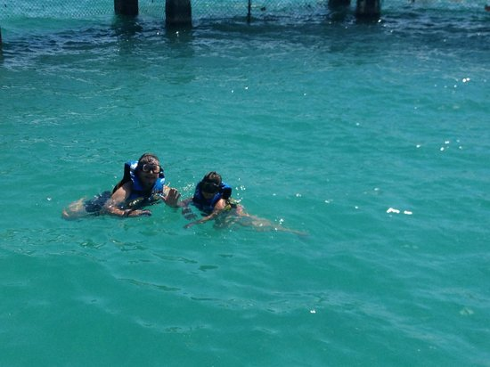 Dolphin Discovery Isla Mujeres: Swimming with sharks and stingrays