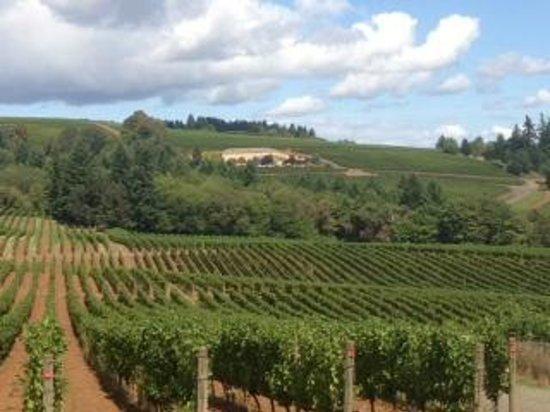 Sokol Blosser Winery: Rolling hills at Sokol Blosser