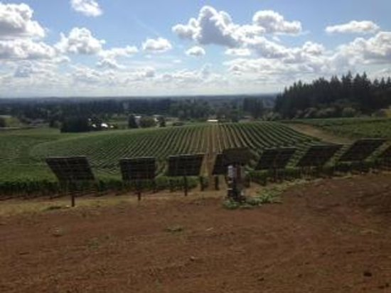 Sokol Blosser Winery: View of the vineyard from the tasting room at Sokol Blosser