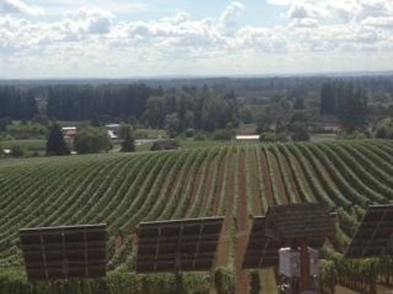 Sokol Blosser Winery: Vinyard at Sokol Blosser