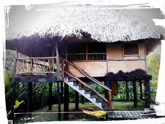 Cotton Tree Lodge: Family Cabana Tree House ...