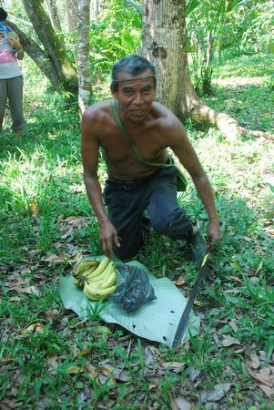 Cotton Tree Lodge : Eladio proudly showing us around his jungle Cacao farm ...