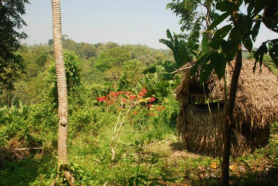Cotton Tree Lodge: Eladio's Jungle Cacao Farm ...