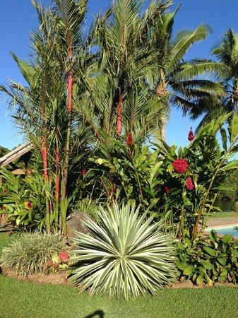 Club Oceanus: tropical gardens