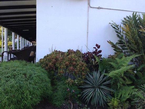 Club Oceanus: gardens