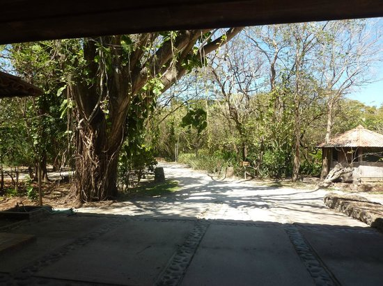Hotel La Pacifica: Nature walk from room to restaurant-wildlife and birds