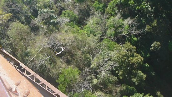 Tropical Bungee: my swan dive into the tropics!