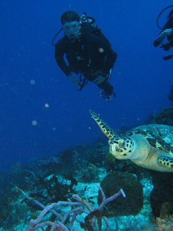 Cancun Scuba Center: Turtle