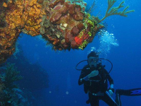 Cancun Scuba Center: Coral