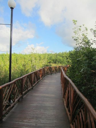 Occidental Cozumel: Bridge over everglades