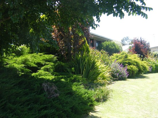 Boomers Guest House: Garden at fron of Guest House
