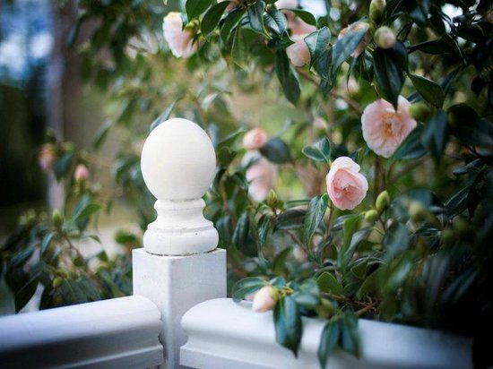 Dunmoylen House: Blacony Garden