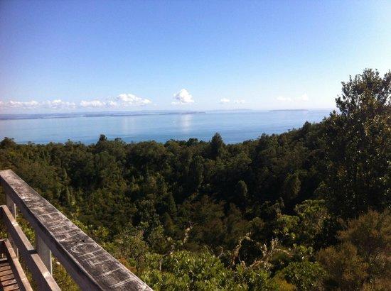 Rangitoto Island: From the summit of Rangitoto