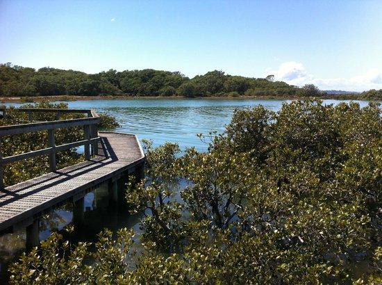 Rangitoto Island: Mangrove walkway