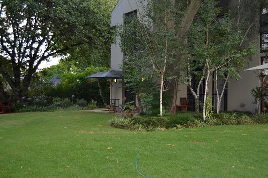 BluSwan Guest House: Most beautiful Big trees and green grass.