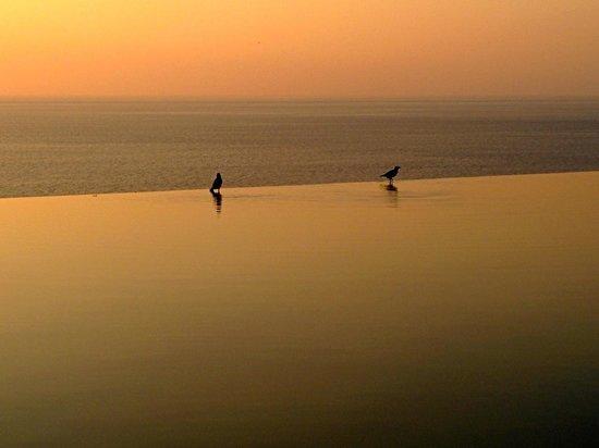 Paresa Resort Phuket : Hotel Infinity pool at sunset