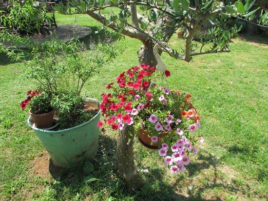Agroturizam Mofardin: giardino