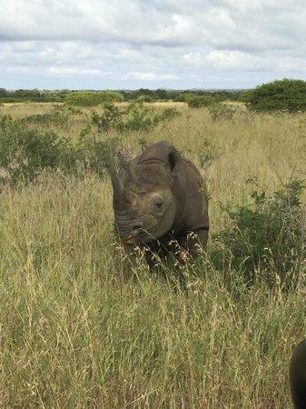 andBeyond Phinda Vlei Lodge : Black Rhino up close