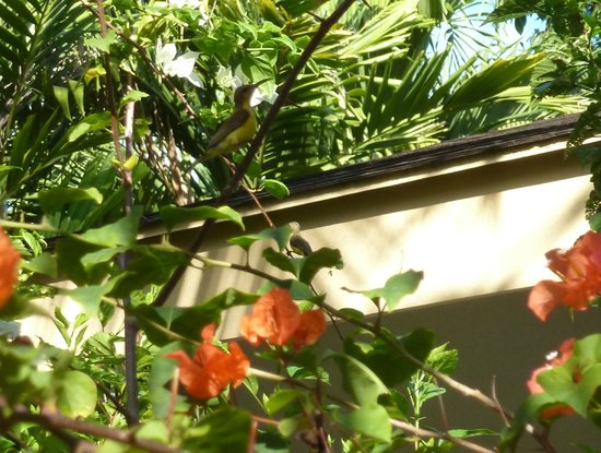 Flower Garden Resort: Yes, there is a little Olive Backed Sunbird in this photo.