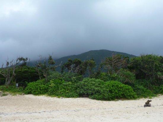 Yonehara Beach: 米原ビーチ